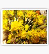 ...it's almost Spring! daffodils..2000 VISUALIZZAZ. GIUGNO  2013-VETRINA RB EXPLORE 17 MARZO 2012 ---- Sticker