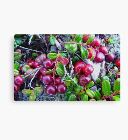 Wild Moss Cranberries Canvas Print