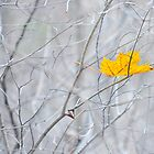 ~ a singular leaf, an Autumn memory... by Laurie Minor