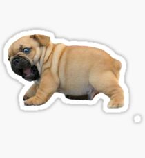 Pug the Pup Sticker