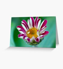 Striped Beauty 1 Greeting Card