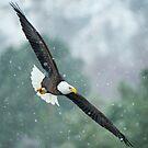 Winter Hunter by DawsonImages