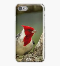 Red Crested Cardinal iPhone Case/Skin