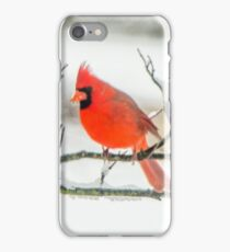 Cardinal In Snow iPhone Case/Skin