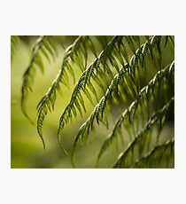 Green Fern Leaves Photographic Print