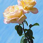 Yellow & Pink Rose by Brinjen