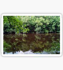 Congaree Nature Reserve, South Carolina, USA Sticker