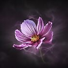 Cosmos Lightning by Helmar Designs