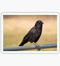 Carrion Crow Sticker