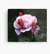 Rose and Buds Metal Print