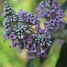 purple touch. by tempuros