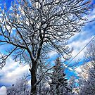 Wintertime by Bente Agerup