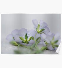 Purple Wild Flowers Poster
