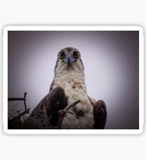 Stay away from my nest Sticker