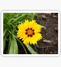 Coreopsis Sticker