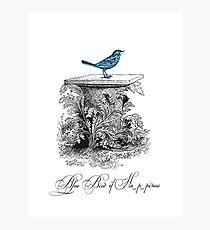 Blue Bird of Happiness Photographic Print