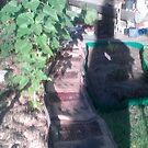 organic path by silenses