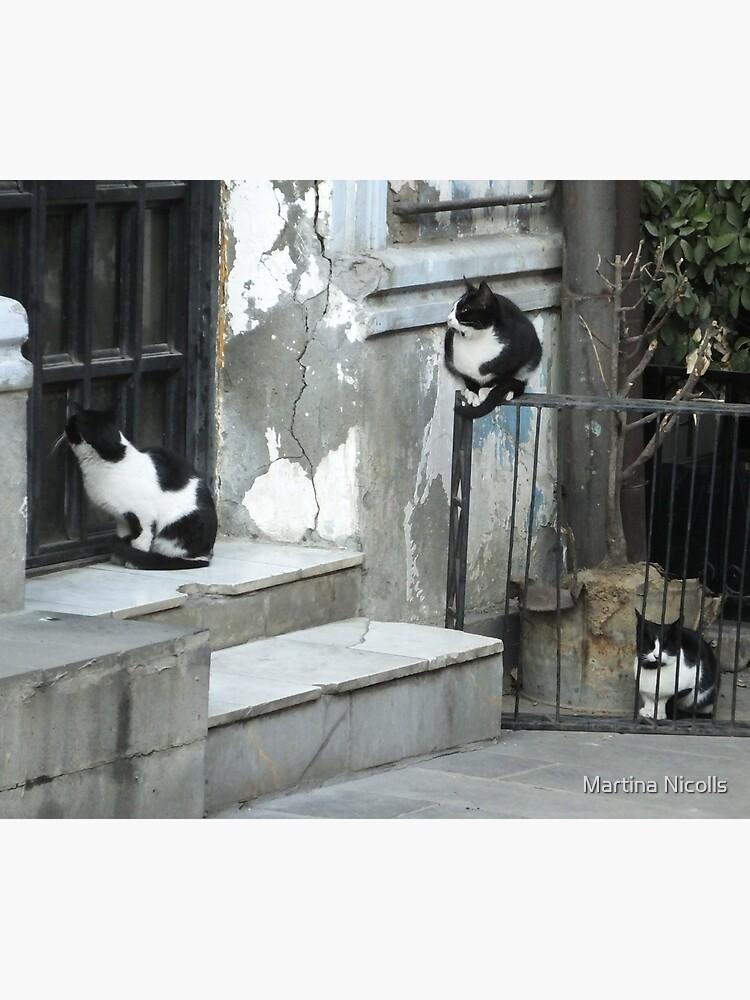 Cats awaiting by martina