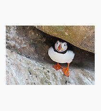 Puffin under a rock, Saltee Islands, County Wexford, Ireland Photographic Print