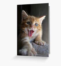 Yawn! Greeting Card