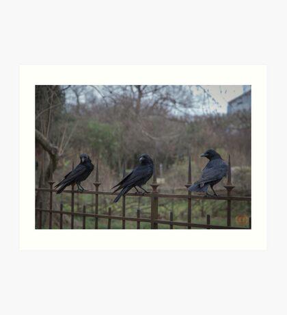 Murder of Crows - Paris Art Print