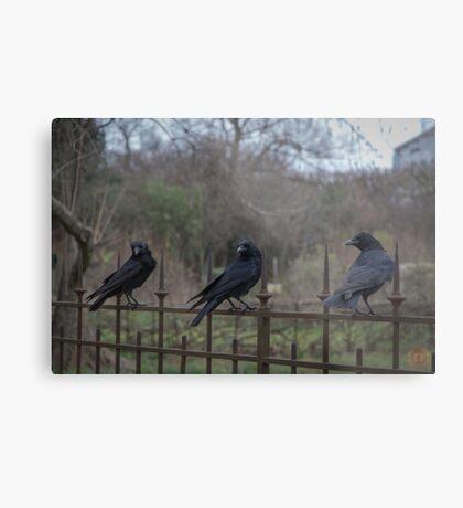 Murder of Crows - Paris Metal Print