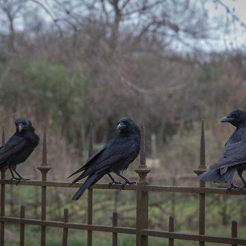 Asesinato de cuervos - París de jpvalery