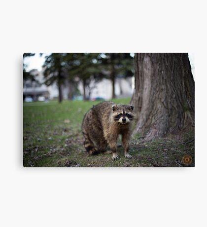 """""""Defiance"""" - Raccoon portrait Canvas Print"""