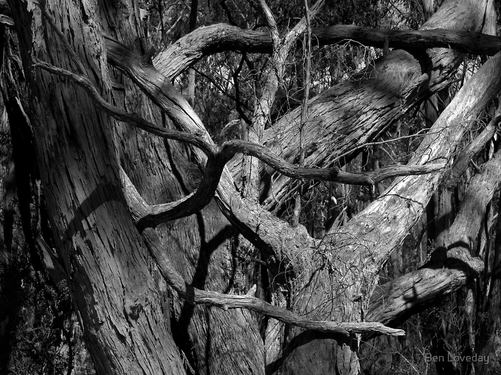 Scary Tree- Wotton Scrub by Ben Loveday