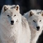 Arctic Wolves by Michael Cummings