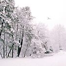 Winter White by Jessica Jenney