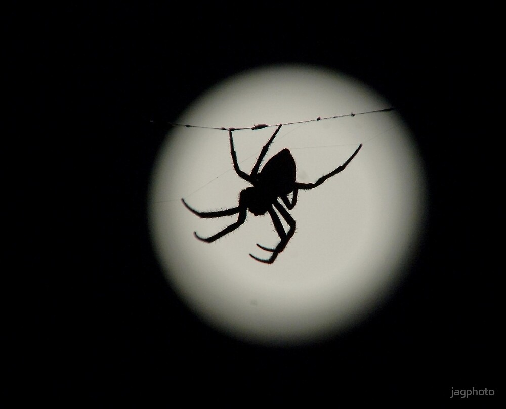 Spider by jagphoto