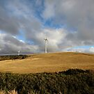 Woolnorth wind farm, Tasmania by gaylene