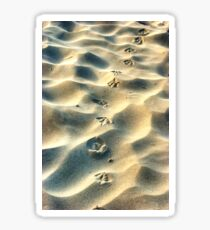 0559 Steps in the sand Sticker
