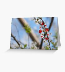Martenichki greeting cards redbubble baba marta day martenica bulgarian national talisman related to the frst day of spring m4hsunfo