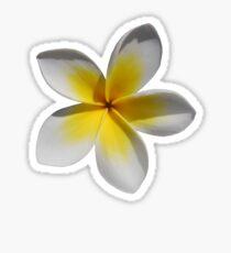 Frangipani Sticker