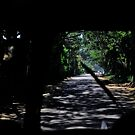 Path ahead narrow  by queenenigma