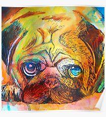 Mr Pug Pop Art  Poster