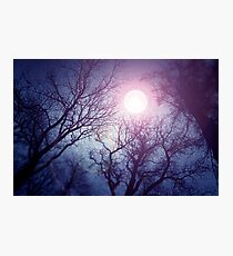 Dark enchanted photo of a full moon in the trees branches background. Blue and violet fairy-tale colors Photographic Print