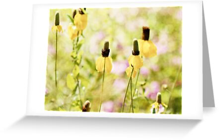 Yellow Mexican Hat Flowers by Pamela Holdsworth