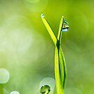 Morning Dew by RenaeSoleil