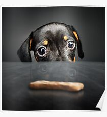 Puppy longing for a treat Poster
