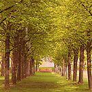 Path Of Trees by Elizabeth  Lilja