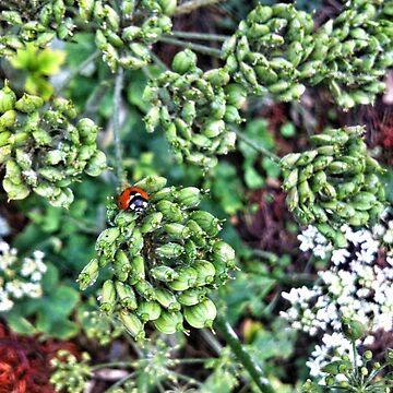 Ladybird by Anitajuli