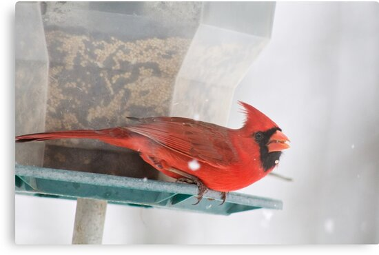 Cardinal in Snow Photograph by Pineappledear
