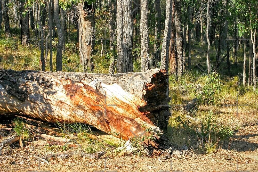 Fallen Tree by eidann