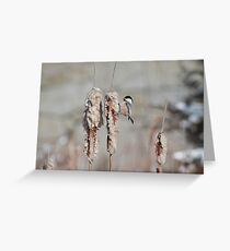 Chickadee foraging in the cattails Greeting Card