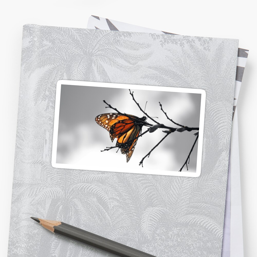 MONARCH BUTTERFLY IN A GRAY WORLD by Sandra  Aguirre