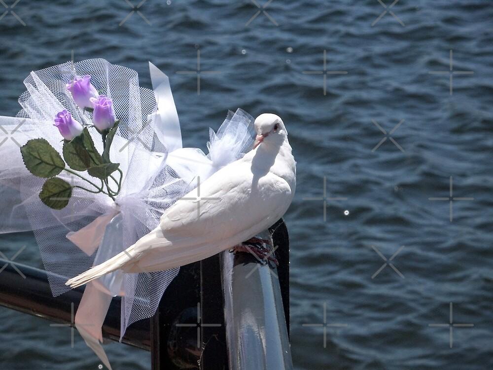 Wedding Dove by eidann
