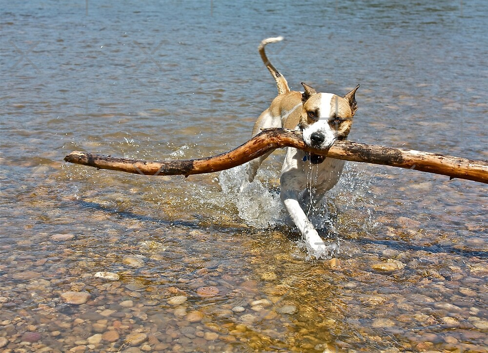Happiness is,,,,, a BIG stick!!  by Linda Bianic